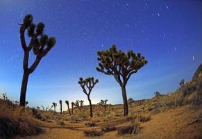 Senderos nocturnos de estrellas en Joshua Tree Park. foto