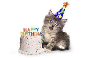Gatito en blanco con celebración de pastel de cumpleaños foto
