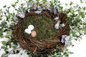 Fondo de foto de fantasía de nido para manipulación digital