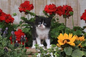Lindo gatito bebé de 3 semanas en un jardín foto