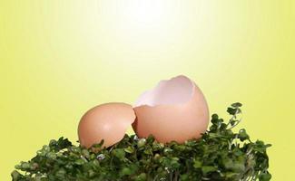 Fondo de foto de fantasía de huevo agrietado abierto para manipulación digital