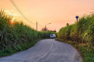 Atardecer en la plantación de caña de azúcar con van conduciendo por carretera asfaltada foto