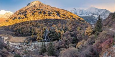Panorama del bosque de pinos dorados en el valle con la montaña sagrada en yading foto