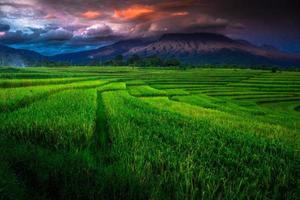 the view of the green rice fields spreads out wide with blue mountains photo