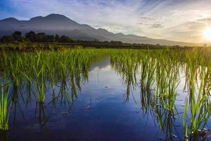 mountain view in the morning with beautiful reflection of sunrise and green rice photo
