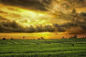 vista de los campos de arroz con el ambiente de la tarde después de la lluvia y el arroz verde foto