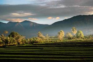 Vista de los campos de arroz por la mañana con un ambiente brumoso por la mañana en una montaña alta foto
