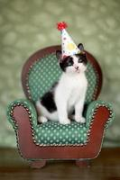 gatito de cumpleaños sentado en una silla foto