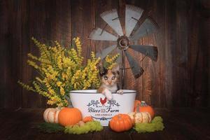 Adorable gatito en un entorno temático de granja foto