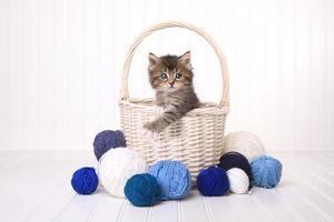 Lindo gatito en una canasta con hilo en blanco foto