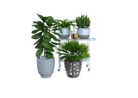 Large Indoor Green Plants Potted Plants photo