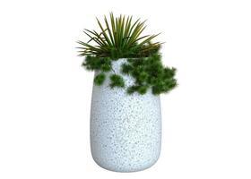 Plants in White Pots photo