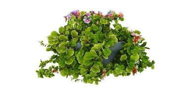 Flowering Green Plant 3d Rendering Modern Potted photo