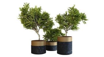 House Plants In Black Marble Pot 3d Render photo