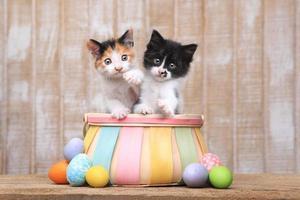 lindo par de gatitos dentro de una canasta de pascua foto