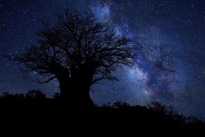 Star Trails Milk Way in South Africa Night Sky photo