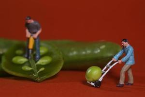 Trabajadores de la construcción en imágenes conceptuales de alimentos con guisantes foto