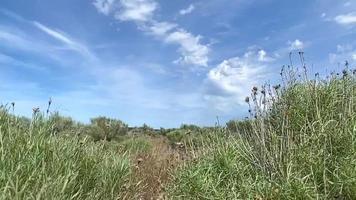 artemisa de primavera en la brisa video