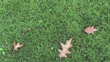 Leaves on the Grass video