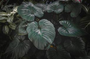 Tropical leafs garden with low lighting . photo