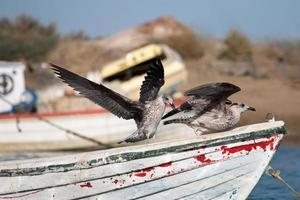 Anchored boat with seagulls. photo