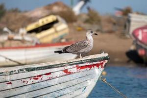 Anchored boat with seagull. photo