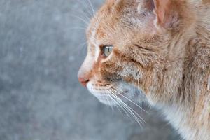 gato naranja en la calle foto