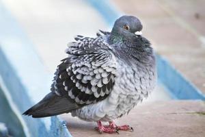paloma con frio foto