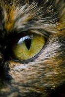 detail of cat's eye photo