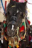 head of a donkey photo
