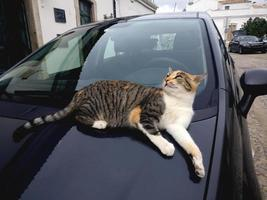 domestic cat on top of car photo