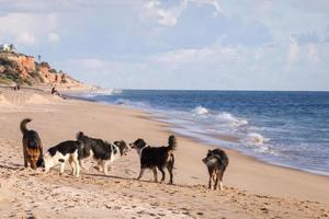 Playful dogs in the beach photo