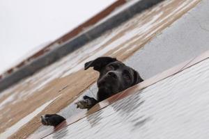 Curious dog on balcony photo