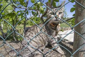 domestic cat behind a net photo