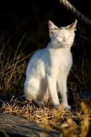 beautiful domestic cat photo