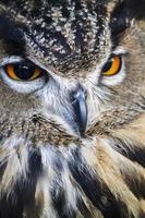 horned owl closeup photo