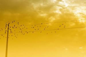 birds on a powerline photo