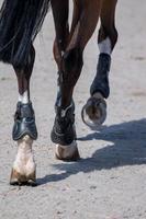 horse legs on dirt photo