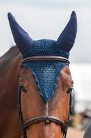Jumping horse head photo