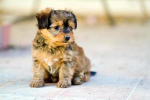 domestic dog closeup photo