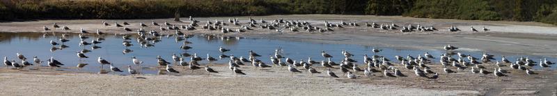 birds on the salt ponds photo