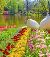 Pink yellow red tulips daffodils Keukenhof park Lisse Holland Netherlands photo