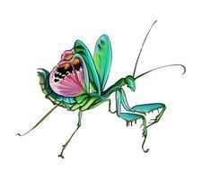 Mantis en una posición defensiva de pinturas multicolores. salpicadura de acuarela, dibujo coloreado, realista. ilustración vectorial de pinturas vector