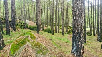 Forest of fine trees Kalam Swat Scenery Landscape photo