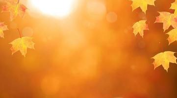 Red-orange maple leaves frame of autumn nature background with bokeh in the forest photo