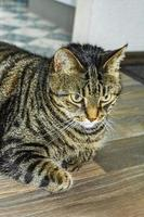 Cute cat with big green eyes that concentrates on ground photo
