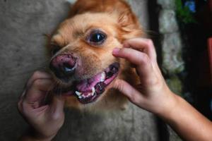 Happy cheerful dog photo