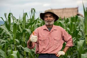 Senior farmer standing thump up in the corn-field photo