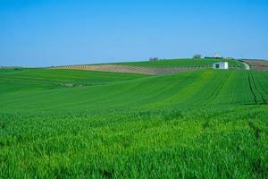 Farm land with crops and a white shed photo
