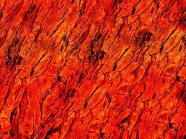 Orange wood texture photo